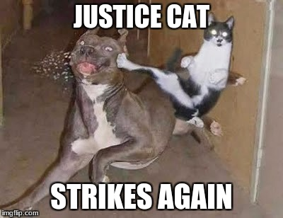 Justice Cat | JUSTICE CAT STRIKES AGAIN | image tagged in cats,justice | made w/ Imgflip meme maker