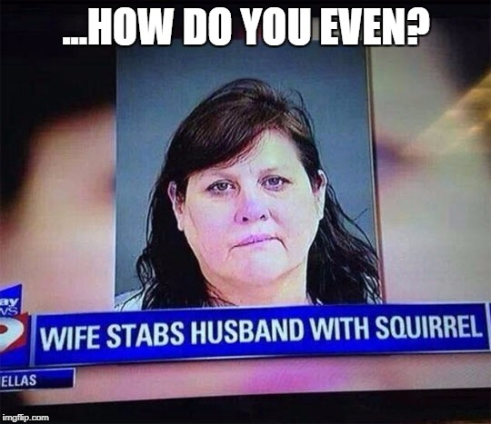 ...was it a particularly pointy squirrel? | ...HOW DO YOU EVEN? | image tagged in squirrel stabber,wtf,how do you even,what | made w/ Imgflip meme maker