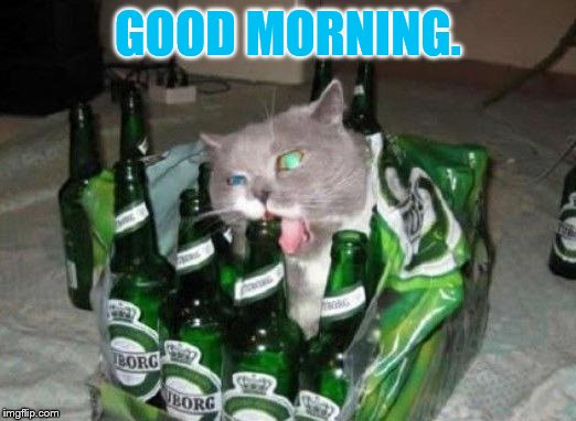 The Morning After | GOOD MORNING. | image tagged in memes,cat memes,beer,box,and,bottle | made w/ Imgflip meme maker
