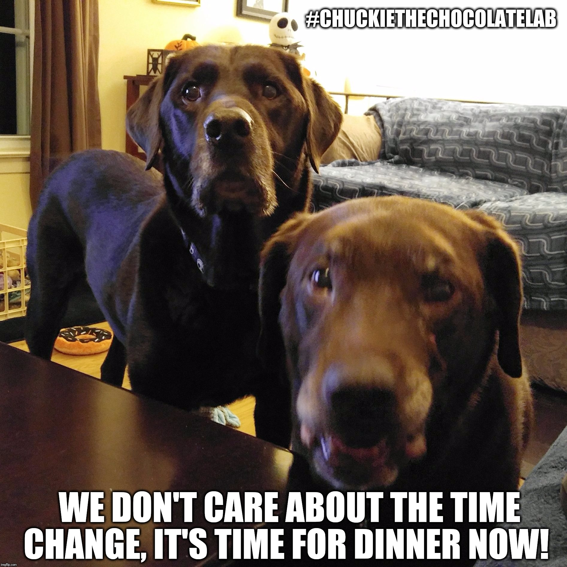 Time change |  #CHUCKIETHECHOCOLATELAB; WE DON'T CARE ABOUT THE TIME CHANGE, IT'S TIME FOR DINNER NOW! | image tagged in chuckie the chocolate lab teamchuckie,time change,daylight saving time,funny,dogs,memes | made w/ Imgflip meme maker