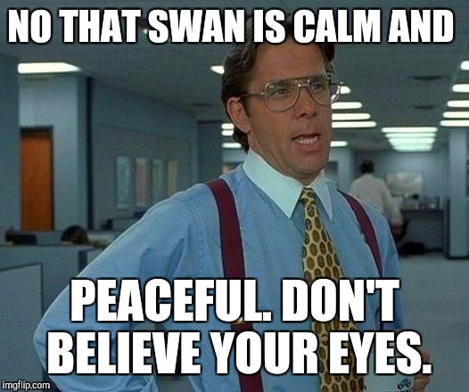 That Would Be Great Meme | NO THAT SWAN IS CALM AND PEACEFUL. DON'T BELIEVE YOUR EYES. | image tagged in memes,that would be great | made w/ Imgflip meme maker