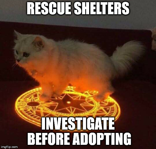 one explanation on why cats have 9 lives: they take others lives. | RESCUE SHELTERS INVESTIGATE BEFORE ADOPTING | image tagged in cats,satan,magic circle,pentagram | made w/ Imgflip meme maker