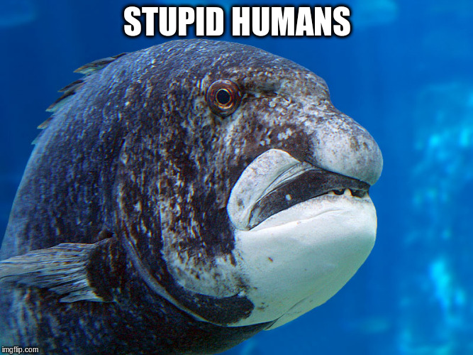 STUPID HUMANS | made w/ Imgflip meme maker