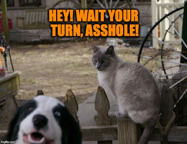 Kitty Diva Gets Photobombed | HEY! WAIT YOUR TURN, ASSHOLE! | image tagged in desperate doggo | made w/ Imgflip meme maker