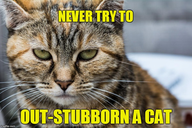 L.L. | NEVER TRY TO OUT-STUBBORN A CAT | image tagged in funny | made w/ Imgflip meme maker