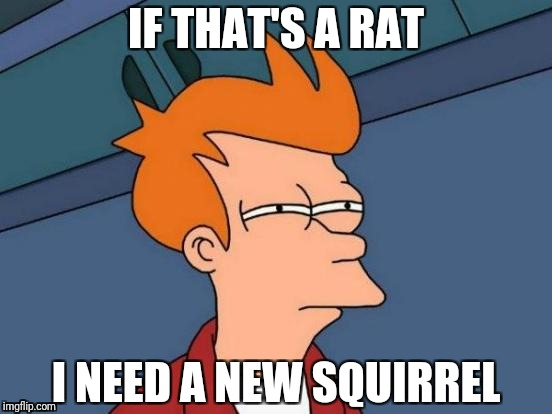 Futurama Fry Meme | IF THAT'S A RAT I NEED A NEW SQUIRREL | image tagged in memes,futurama fry | made w/ Imgflip meme maker