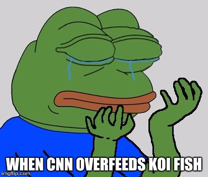 CNN: the koi fish massacre | WHEN CNN OVERFEEDS KOI FISH | image tagged in pepe cry | made w/ Imgflip meme maker