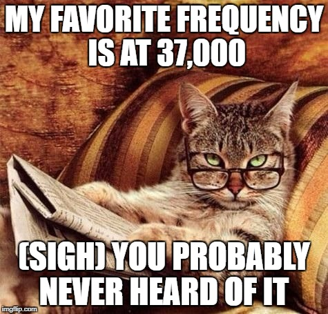 MY FAVORITE FREQUENCY IS AT 37,000 (SIGH) YOU PROBABLY NEVER HEARD OF IT | image tagged in reading cat with glasses | made w/ Imgflip meme maker