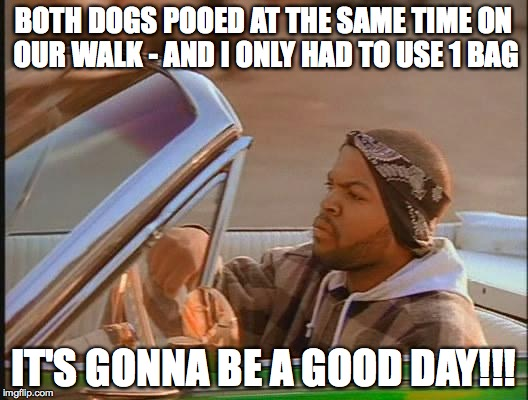 Ice Cube | BOTH DOGS POOED AT THE SAME TIME ON OUR WALK - AND I ONLY HAD TO USE 1 BAG IT'S GONNA BE A GOOD DAY!!! | image tagged in ice cube | made w/ Imgflip meme maker