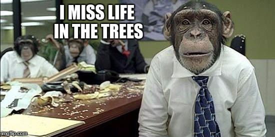 Office monkeys | I MISS LIFE IN THE TREES | image tagged in office monkeys | made w/ Imgflip meme maker