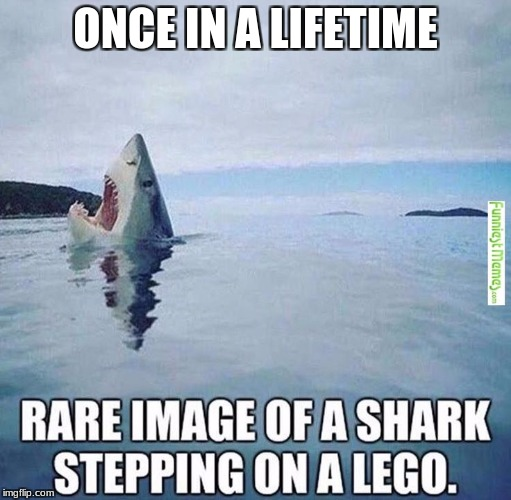 ONCE IN A LIFETIME | image tagged in shark,lego,image,teeth | made w/ Imgflip meme maker