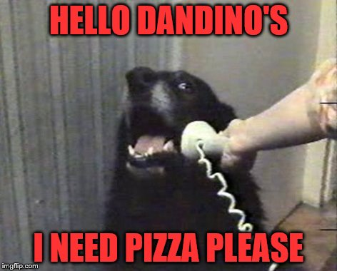hello this is dog | HELLO DANDINO'S I NEED PIZZA PLEASE | image tagged in hello this is dog | made w/ Imgflip meme maker