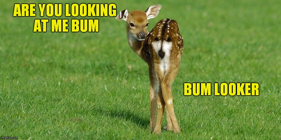 Hello my name is Simon, and I like to do drawings... | ARE YOU LOOKING AT ME BUM BUM LOOKER | image tagged in bum,looker,deer,funny animals | made w/ Imgflip meme maker