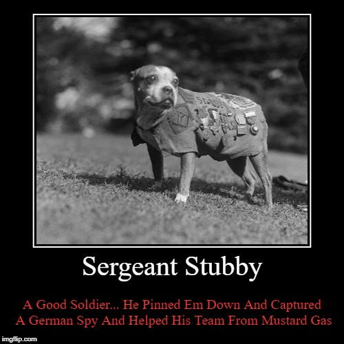 Sergeant Stubby | Sergeant Stubby | A Good Soldier... He Pinned Em Down And Captured A German Spy And Helped His Team From Mustard Gas | image tagged in demotivationals,sergeant stubby | made w/ Imgflip demotivational maker