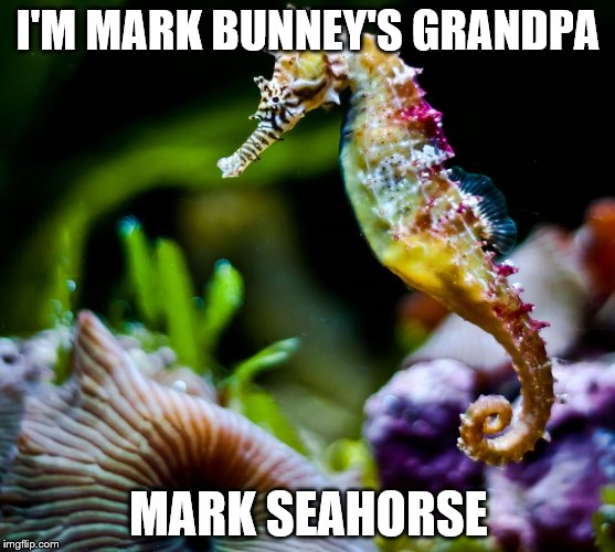 I'M MARK BUNNEY'S GRANDPA MARK SEAHORSE | image tagged in colorful seahorse | made w/ Imgflip meme maker