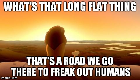 WHAT'S THAT LONG FLAT THING THAT'S A ROAD WE GO THERE TO FREAK OUT HUMANS | made w/ Imgflip meme maker
