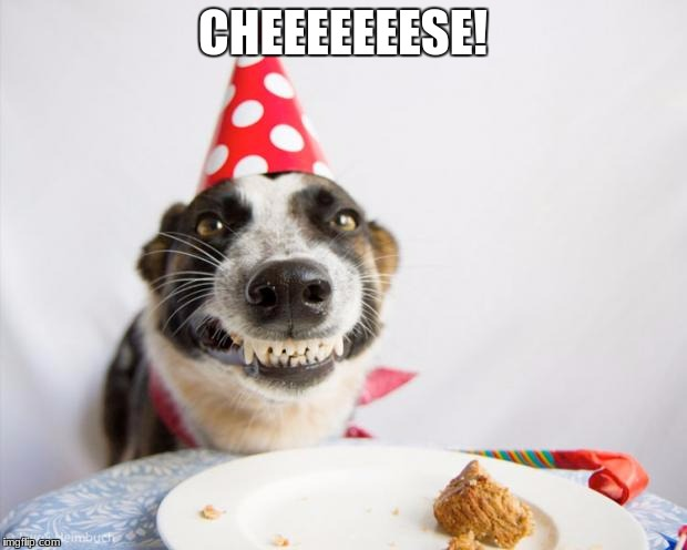 birthday dog | CHEEEEEEESE! | image tagged in birthday dog | made w/ Imgflip meme maker