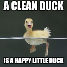 A CLEAN DUCK IS A HAPPY LITTLE DUCK | made w/ Imgflip meme maker