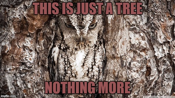You don't have to be in the military to be an expert in camouflage | THIS IS JUST A TREE NOTHING MORE | image tagged in memes,military week,funny,camouflage,owl,dank memes | made w/ Imgflip meme maker