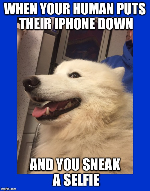 Sneaky Doggo | WHEN YOUR HUMAN PUTS THEIR IPHONE DOWN AND YOU SNEAK A SELFIE | image tagged in sneaky doggo | made w/ Imgflip meme maker