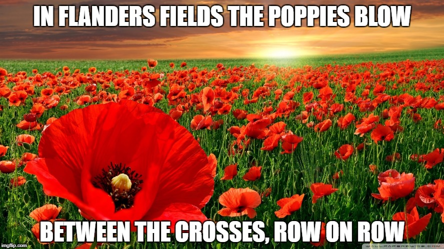 IN FLANDERS FIELDS THE POPPIES BLOW BETWEEN THE CROSSES, ROW ON ROW | image tagged in poppy field | made w/ Imgflip meme maker