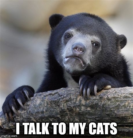 Confession Bear Meme | I TALK TO MY CATS | image tagged in memes,confession bear | made w/ Imgflip meme maker