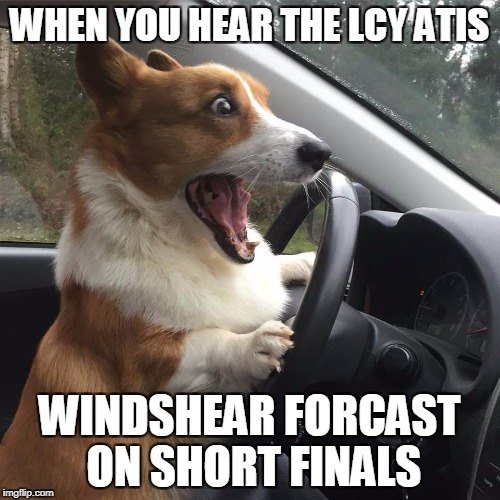 WHEN YOU HEAR THE LCY ATIS WINDSHEAR FORCAST ON SHORT FINALS | image tagged in surprised driving dog | made w/ Imgflip meme maker