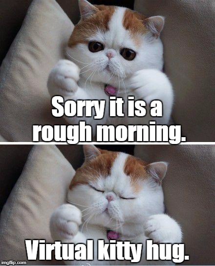 I need hugs cat | Sorry it is a rough morning. Virtual kitty hug. | image tagged in i need hugs cat | made w/ Imgflip meme maker