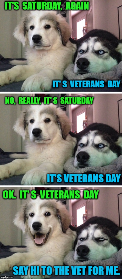 Bad pun dogs | IT'S  SATURDAY,  AGAIN SAY HI TO THE VET FOR ME. IT' S  VETERANS  DAY NO,  REALLY,  IT' S  SATURDAY IT'S VETERANS DAY OK.  IT' S  VETERANS   | image tagged in bad pun dogs | made w/ Imgflip meme maker