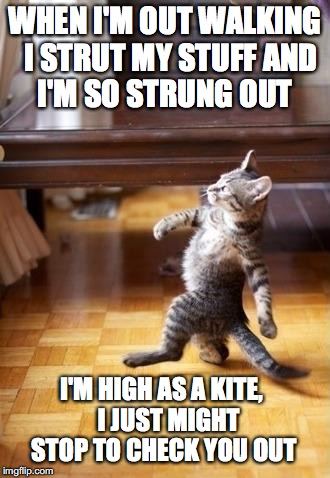 Cool Cat Stroll Meme | WHEN I'M OUT WALKING  I STRUT MY STUFF AND I'M SO STRUNG OUT I'M HIGH AS A KITE,   I JUST MIGHT STOP TO CHECK YOU OUT | image tagged in memes,cool cat stroll | made w/ Imgflip meme maker