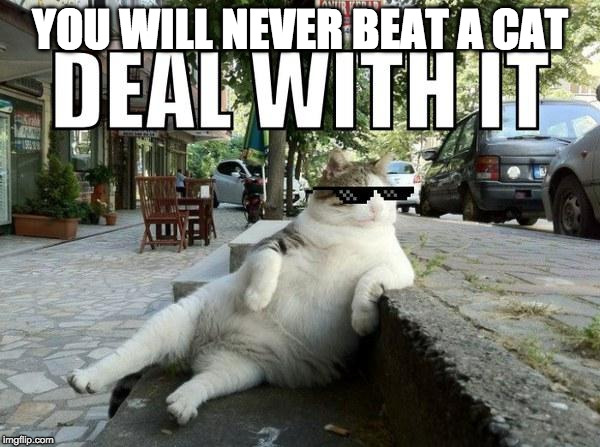 Deal with it cat | YOU WILL NEVER BEAT A CAT | image tagged in deal with it cat | made w/ Imgflip meme maker