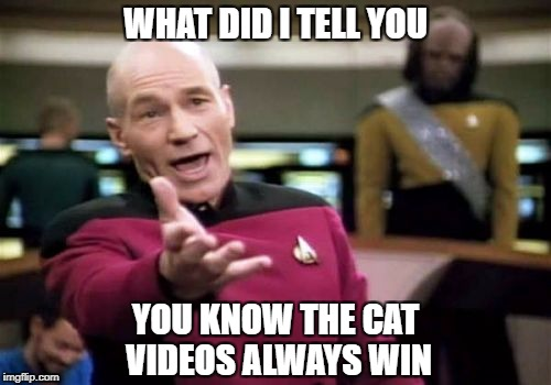 win | WHAT DID I TELL YOU YOU KNOW THE CAT VIDEOS ALWAYS WIN | image tagged in memes | made w/ Imgflip meme maker