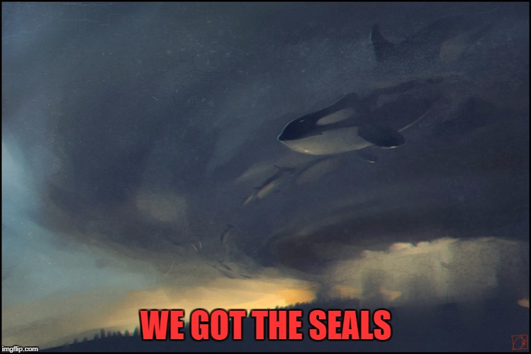 WE GOT THE SEALS | made w/ Imgflip meme maker