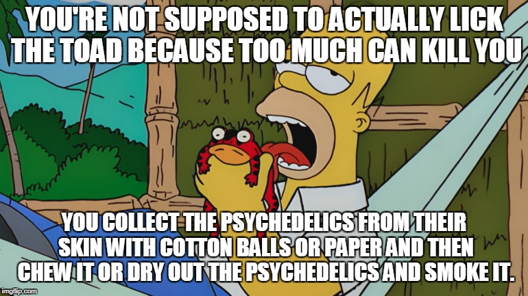 YOU'RE NOT SUPPOSED TO ACTUALLY LICK THE TOAD BECAUSE TOO MUCH CAN KILL YOU YOU COLLECT THE PSYCHEDELICS FROM THEIR SKIN WITH COTTON BALLS O | made w/ Imgflip meme maker
