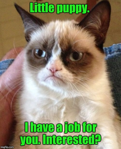 Grumpy Cat Meme | Little puppy. I have a job for you. Interested? | image tagged in memes,grumpy cat | made w/ Imgflip meme maker
