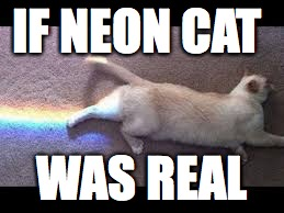 neon cat | IF NEON CAT WAS REAL | image tagged in fuuny | made w/ Imgflip meme maker