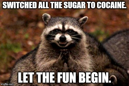Evil Plotting Raccoon Meme | SWITCHED ALL THE SUGAR TO COCAINE. LET THE FUN BEGIN. | image tagged in memes,evil plotting raccoon | made w/ Imgflip meme maker