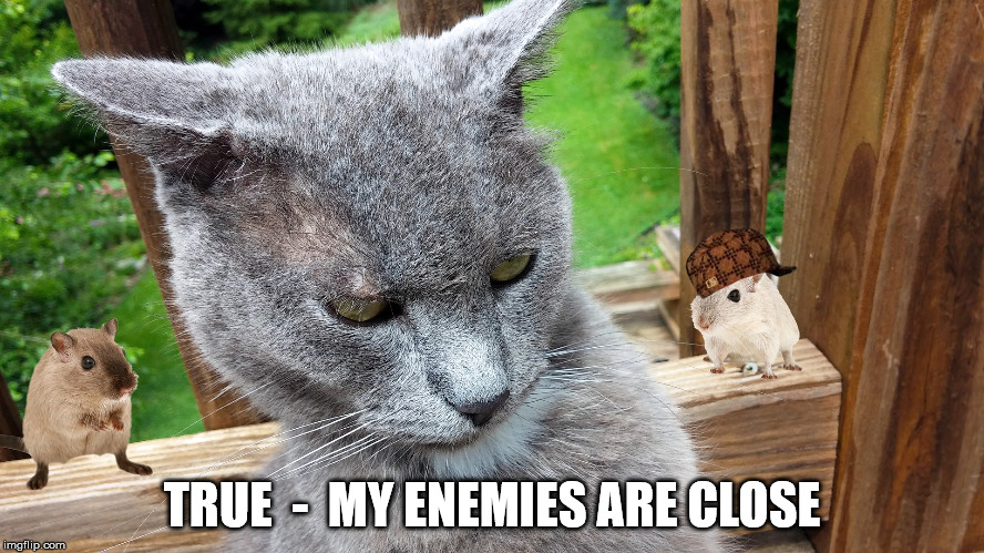 Cat Rage | TRUE  -  MY ENEMIES ARE CLOSE | image tagged in cat rage,scumbag | made w/ Imgflip meme maker