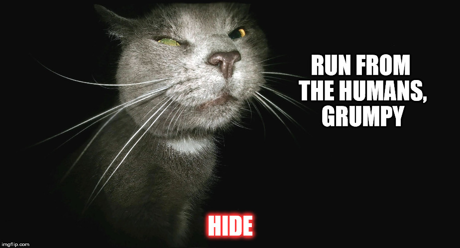 Stalker Cat | RUN FROM THE HUMANS, GRUMPY HIDE | image tagged in stalker cat | made w/ Imgflip meme maker