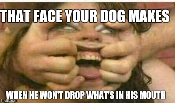 nsfw!! | THAT FACE YOUR DOG MAKES WHEN HE WON'T DROP WHAT'S IN HIS MOUTH | image tagged in nsfw,funny memes,rude,porn,dog | made w/ Imgflip meme maker