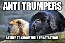Trump triggers devolving gene in humans.  | ANTI TRUMPERS GATHER TO SHOW THEIR FRUSTRATION. | image tagged in first world problems,anti trump meme,anti trump protest,trump | made w/ Imgflip meme maker