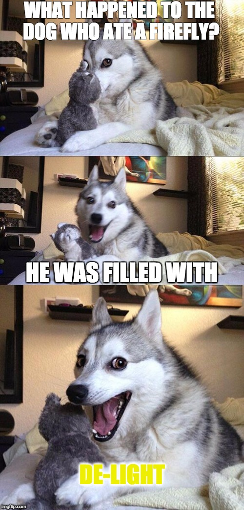 Bad Pun Dog Meme | WHAT HAPPENED TO THE DOG WHO ATE A FIREFLY? HE WAS FILLED WITH DE-LIGHT | image tagged in memes,bad pun dog | made w/ Imgflip meme maker