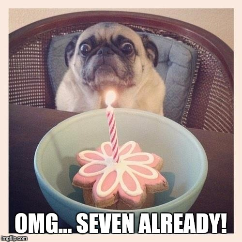 OMG... SEVEN ALREADY! | image tagged in surprised dog | made w/ Imgflip meme maker