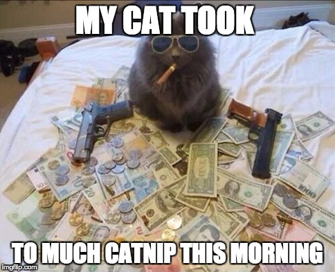 MY CAT TOOK TO MUCH CATNIP THIS MORNING | image tagged in pimp cat big daddy catnip | made w/ Imgflip meme maker