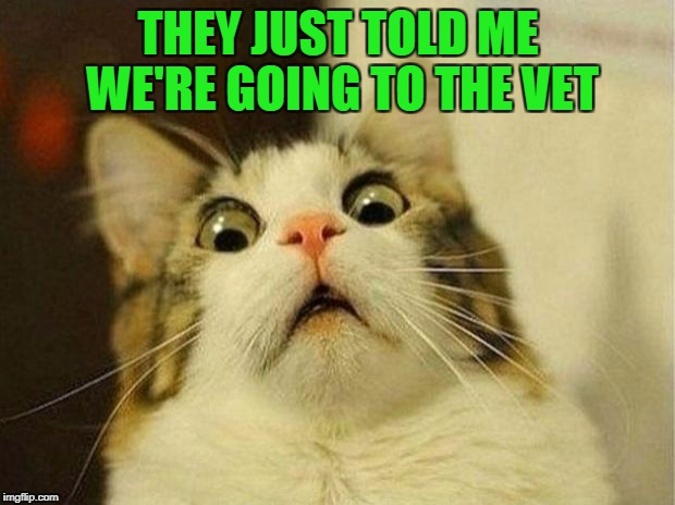THEY JUST TOLD ME WE'RE GOING TO THE VET | made w/ Imgflip meme maker