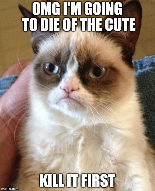 Grumpy Cat Meme | OMG I'M GOING TO DIE OF THE CUTE KILL IT FIRST | image tagged in memes,grumpy cat | made w/ Imgflip meme maker