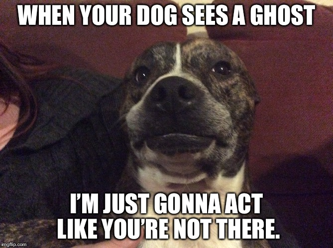 WHEN YOUR DOG SEES A GHOST I'M JUST GONNA ACT LIKE YOU'RE NOT THERE. | image tagged in dogs | made w/ Imgflip meme maker