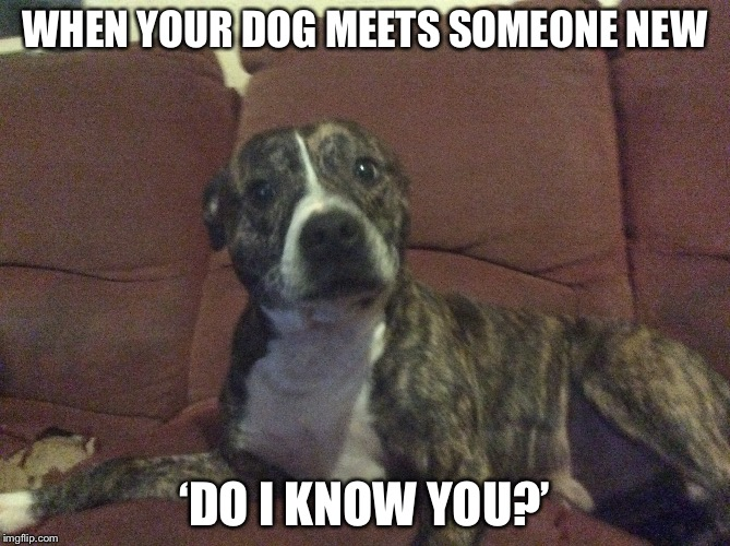 WHEN YOUR DOG MEETS SOMEONE NEW 'DO I KNOW YOU?' | image tagged in who are you | made w/ Imgflip meme maker