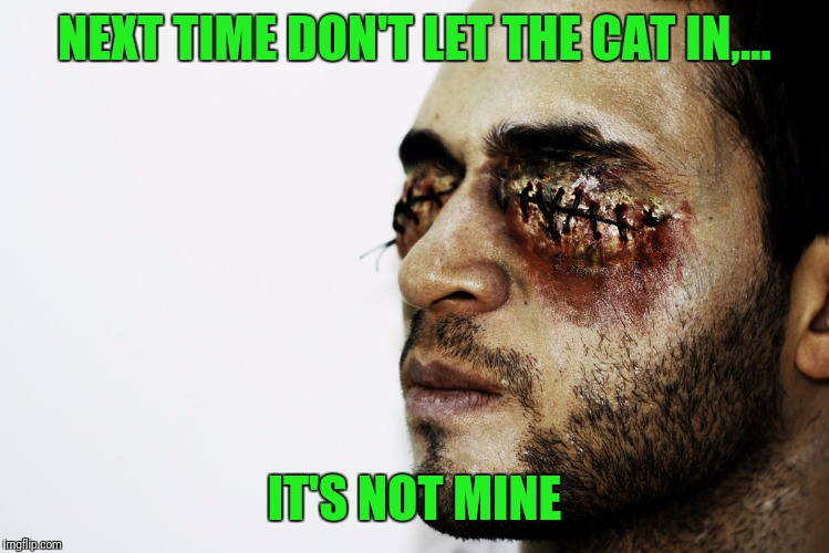 NEXT TIME DON'T LET THE CAT IN,... IT'S NOT MINE | made w/ Imgflip meme maker