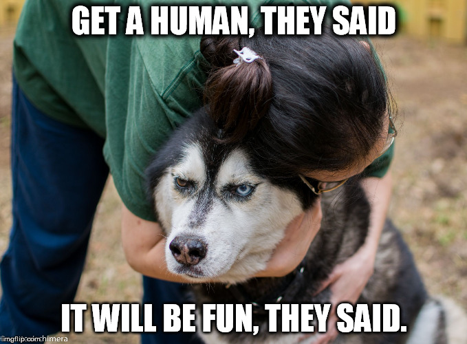 Really, human? | GET A HUMAN, THEY SAID IT WILL BE FUN, THEY SAID. | image tagged in really,human | made w/ Imgflip meme maker